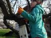 issa-obrezuje-drevje